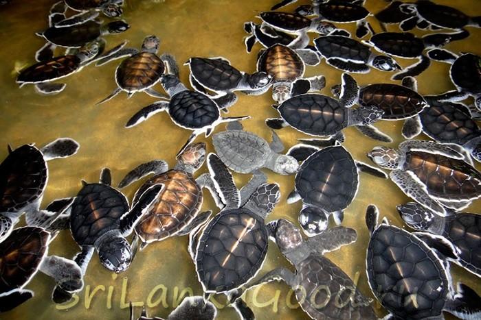 Ферма с черепахами