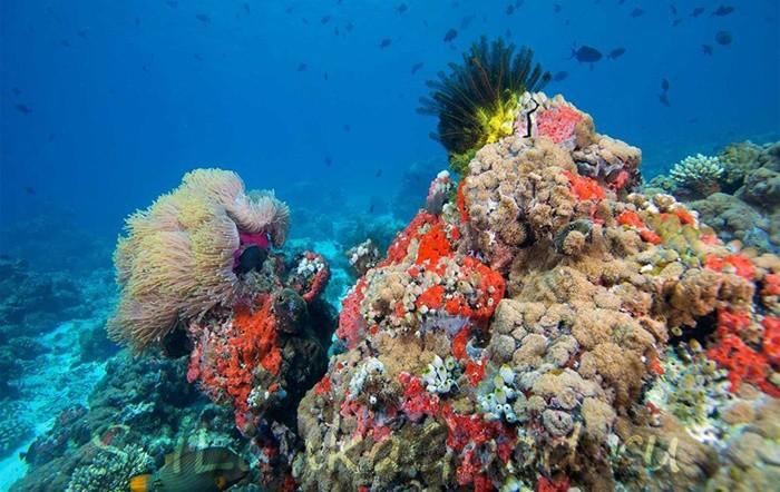 Кораллы в Шри-Ланке