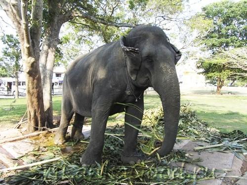 Бедные слоники