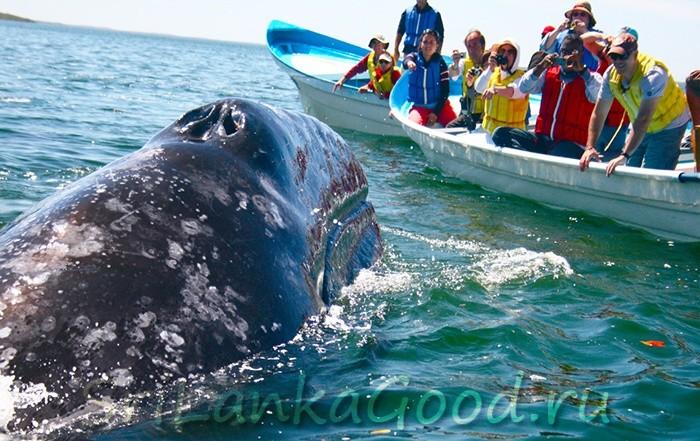 Китовое сафари