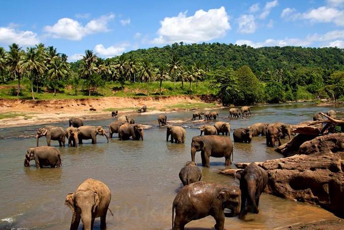 Слоны пьют воду