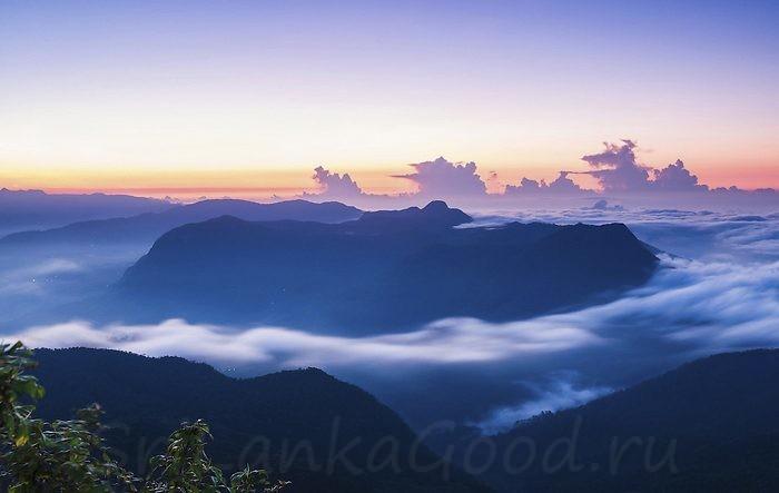 Туман над чайной плантацией
