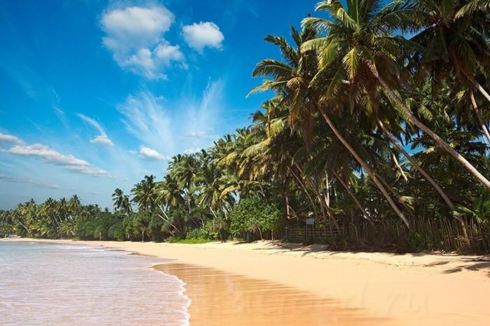 Береговая линия с пальмами