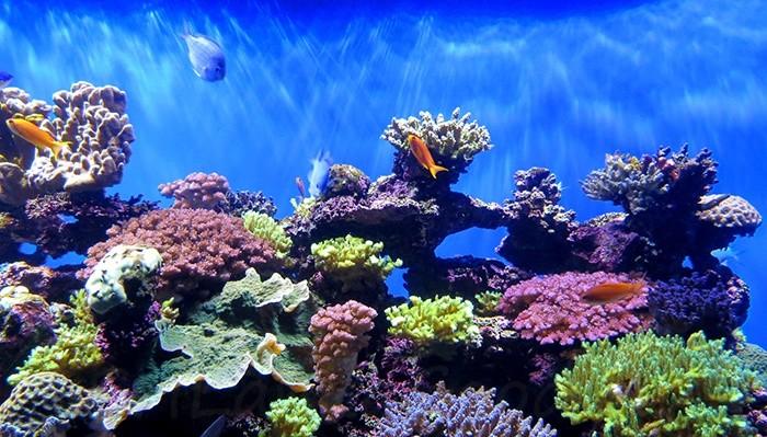 Национальный заповедник кораллов